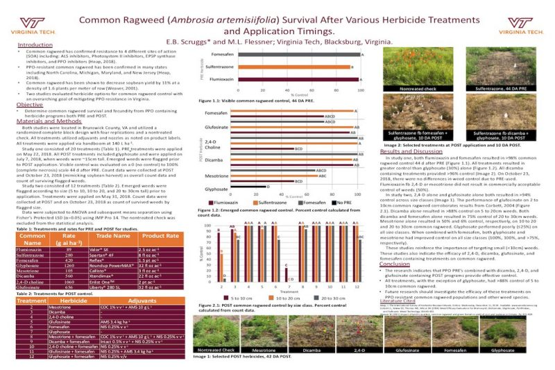 Poster describing common ragweed response to various herbicide treatments at varying application times.