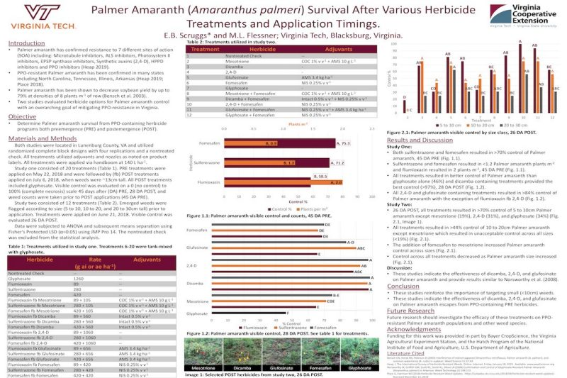 Poster showing preliminary results about survival of Palmer amaranth after herbicide treatments across varying plant sizes